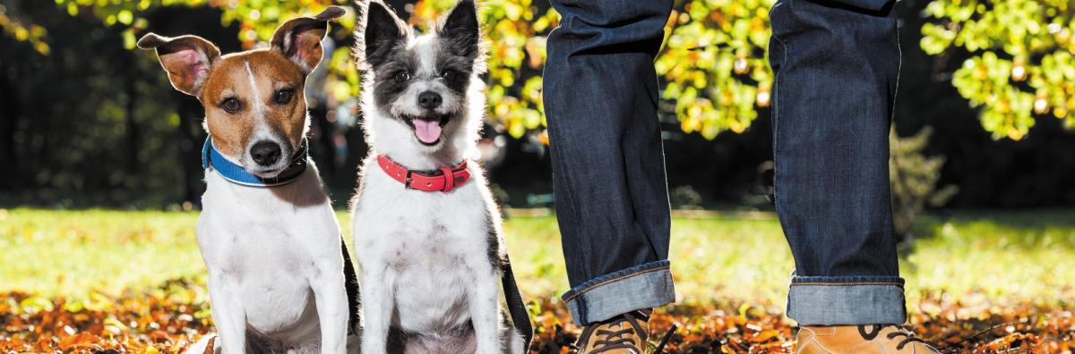 Dogs Standing in Autumn Leaves at Owners Feet