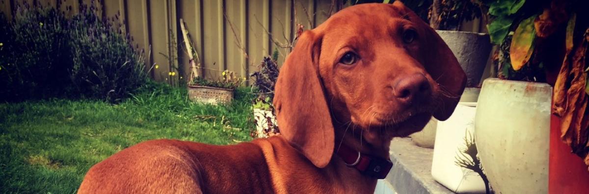 Pet registration fees | City of Greater Bendigo