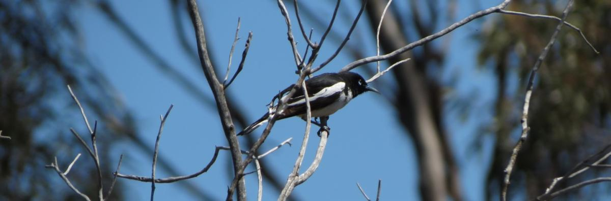 Native bird in tree